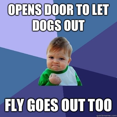 Opens door to let dogs out Fly goes out too - Success Kid