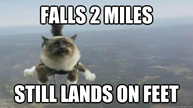 falls 2 miles still lands on feet - Skydiving Cat