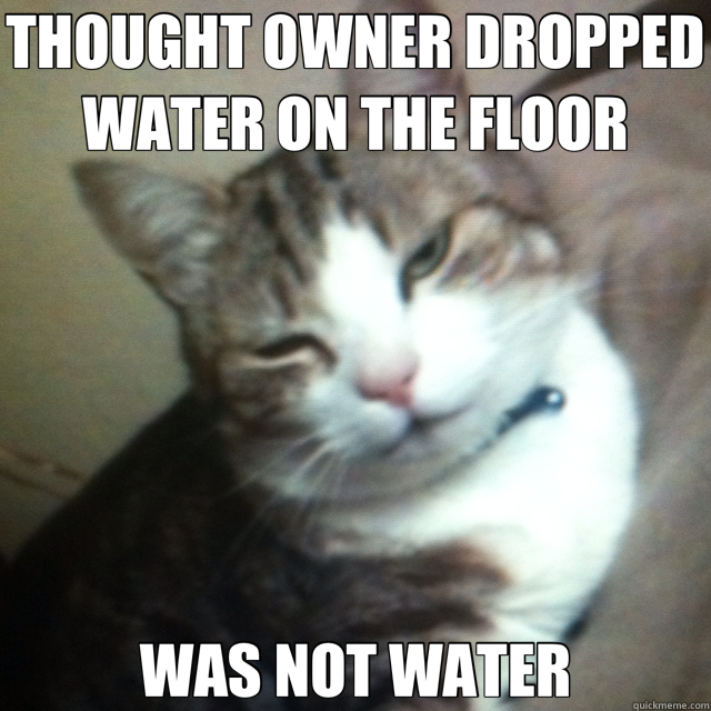 THOUGHT OWNER DROPPED WATER ON THE FLOOR WAS NOT WATER - drunk cat
