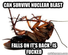 can survive nuclear blast falls on its back is fucked  - Dead Cockroach