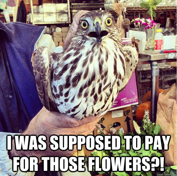 i was supposed to pay for those flowers - Flower Hawk