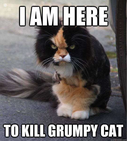 i am here to kill grumpy cat - Evil Cat