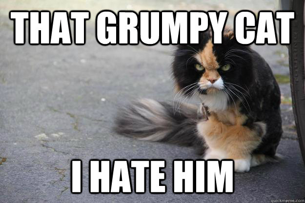 That Grumpy Cat I Hate Him - Angry Cat - quickmeme