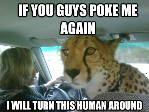 if you guys poke me again i will turn this human around - Chill Cheetah