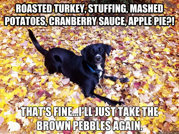 roasted turkey stuffing mashed potatoes cranberry sauce  - Guilt Giving Good Dog