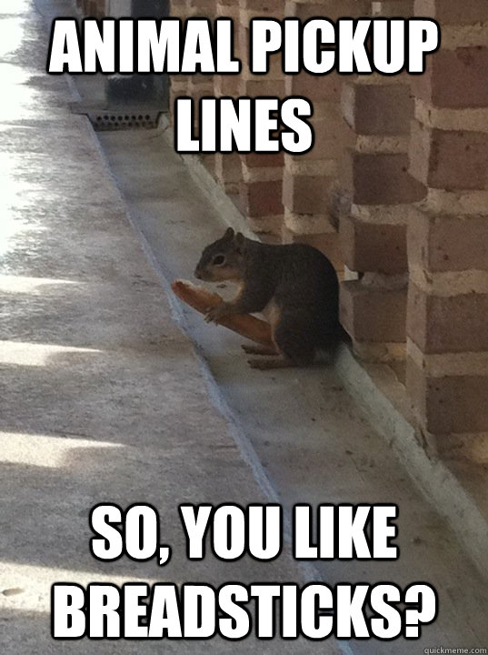 animal pickup lines so you like breadsticks - Squirrelbreadstick