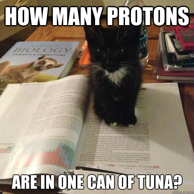how many protons are in one can of tuna - Procrastination Kitten