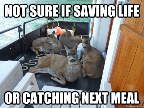 not sure if saving life or catching next meal - Skeptical deer...