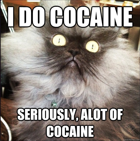 i do cocaine seriously alot of cocaine - strung out cat