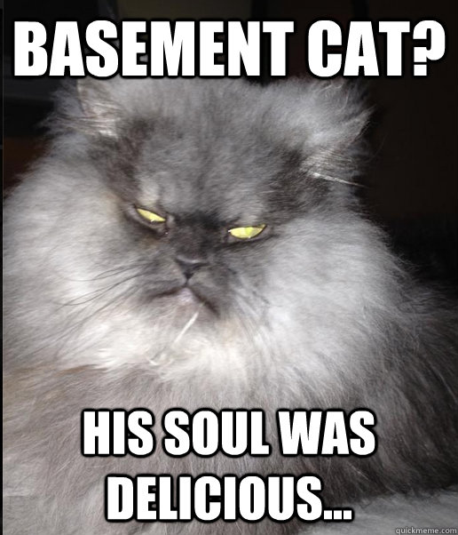 basement cat his soul was delicious -