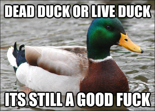dead duck or live duck its still a good fuck - Actual Advice Mallard