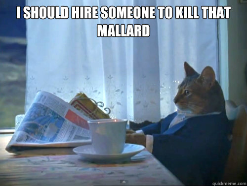 i should hire someone to kill that mallard  - The One Percent Cat