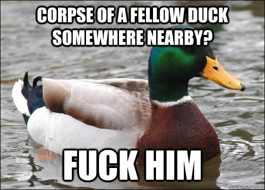 corpse of a fellow duck somewhere nearby fuck him - Actual Advice Mallard