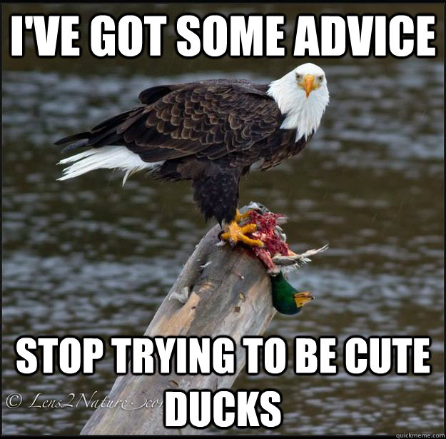 ive got some advice stop trying to be cute ducks -