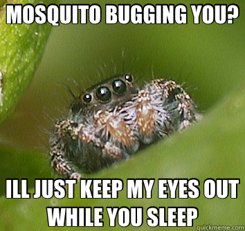 MOSQUITO BUGGING YOU? ILL JUST KEEP MY EYES OUT WHILE YOU SL - Misunderstood Spider