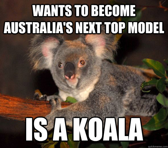 wants to become australias next top model is a koala - 