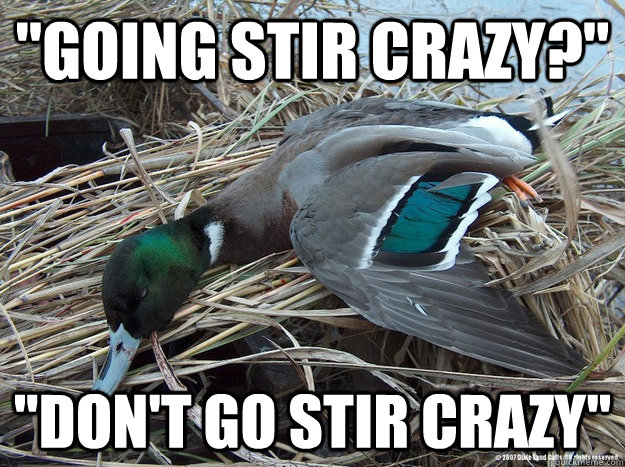going stir crazy dont go stir crazy - Worthless Advice Mallard