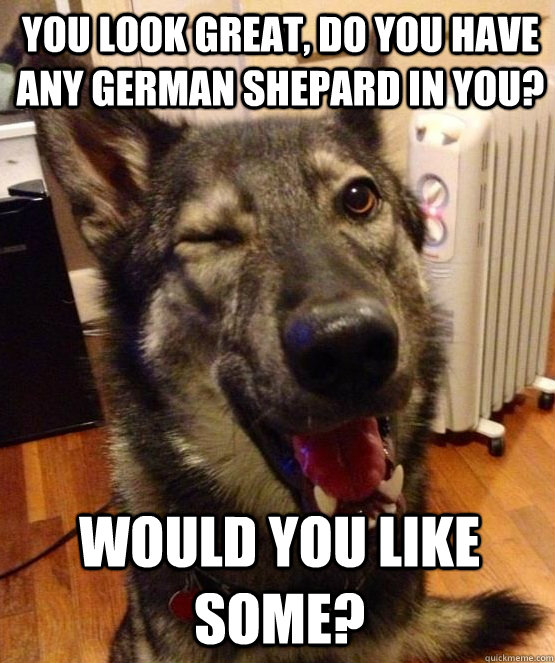 you look great do you have any german shepard in you would - Pickup Pup