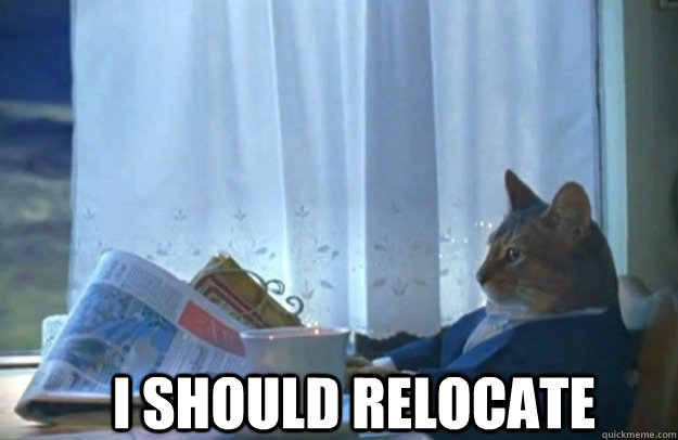 i should relocate - Sophisticated Cat