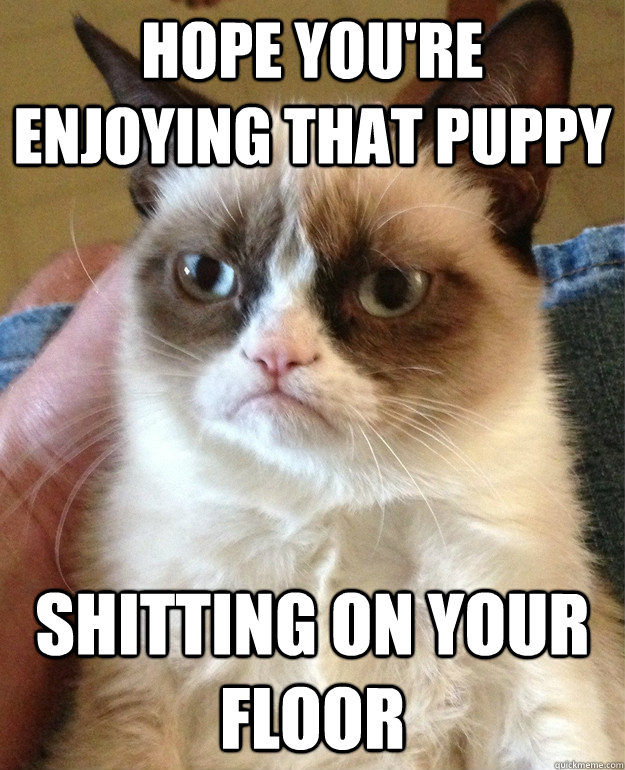 hope youre enjoying that puppy shitting on your floor - Grumpy Cat
