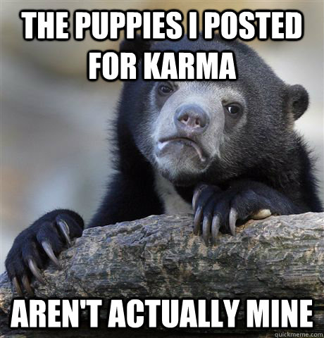 the puppies i posted for karma arent actually mine - Confession Bear