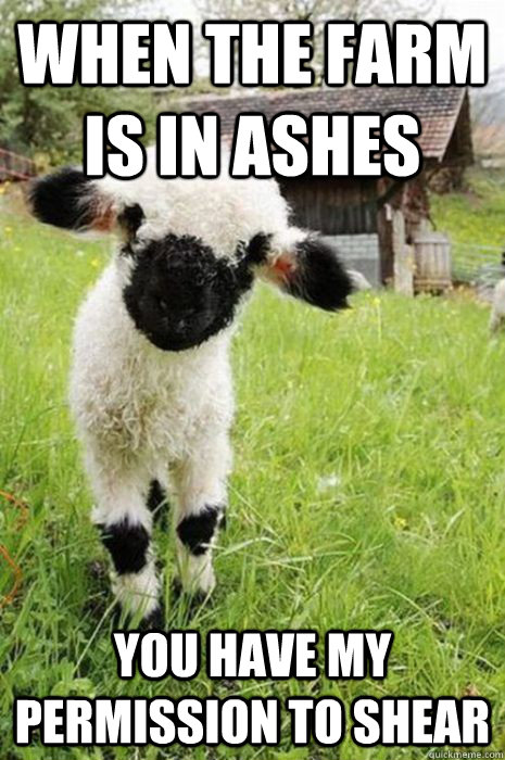 when the farm is in ashes you have my permission to shear - baby bane sheep