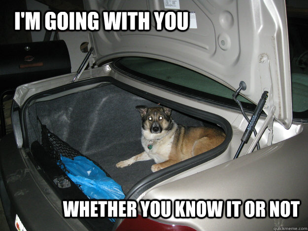 im going with you whether you know it or not - Stow Away Dog