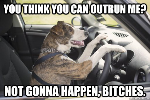 you think you can outrun me not gonna happen bitches - Driving dog