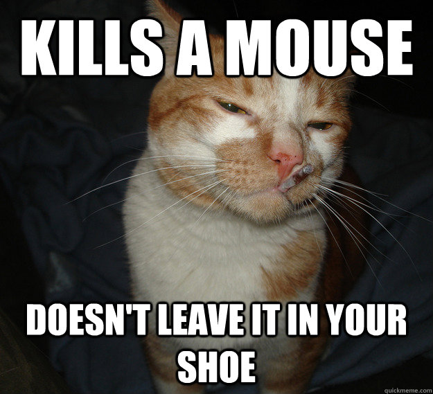 kills a mouse doesnt leave it in your shoe - Cool Cat Craig
