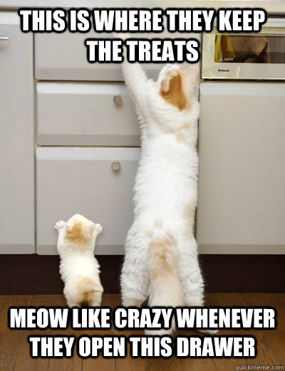 this is where they keep the treats meow like crazy whenever  - Advice Mom Cat