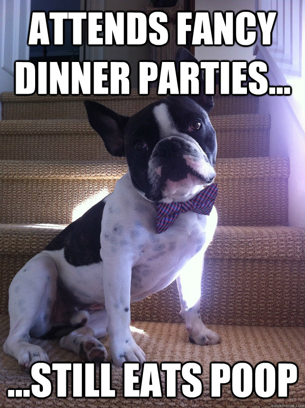 sexy dog - attends fancy dinner parties still eats poop