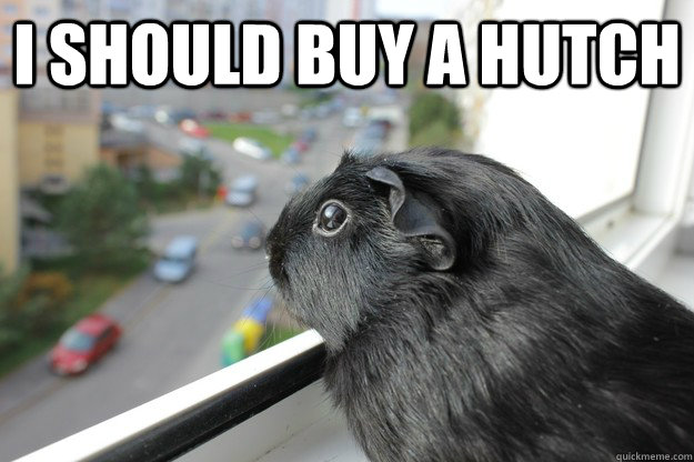 i should buy a hutch  - Pensive Piggie