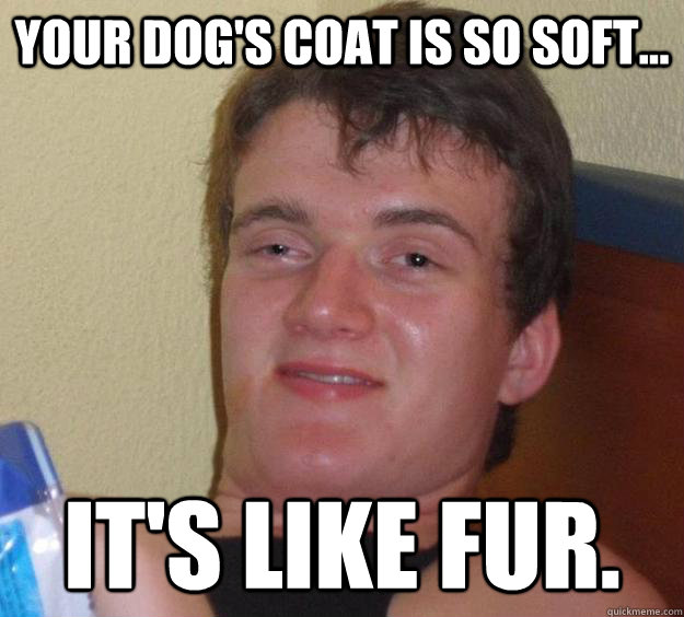 your dogs coat is so soft its like fur - 10 Guy