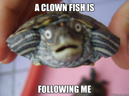 a clown fish is following me -