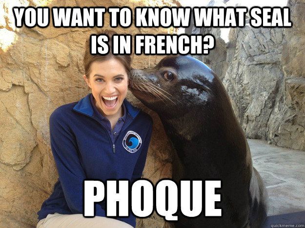 you want to know what seal is in french phoque - Crazy Secret