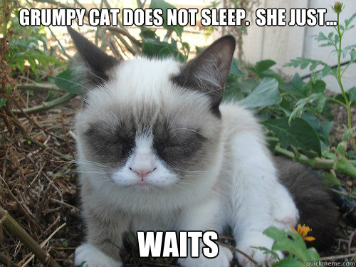 grumpy cat does not-#13