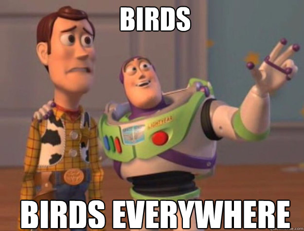 birds birds everywhere - buzz woody