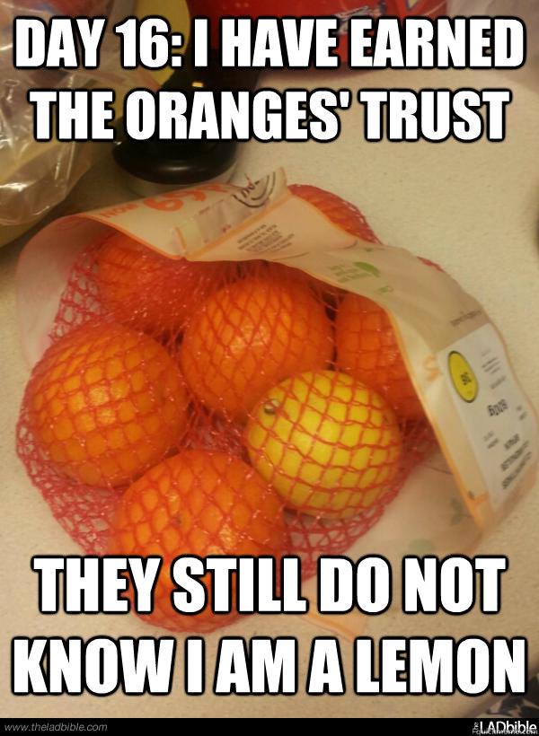 day 16 i have earned the oranges trust they still do not k - Turning into a lemon party