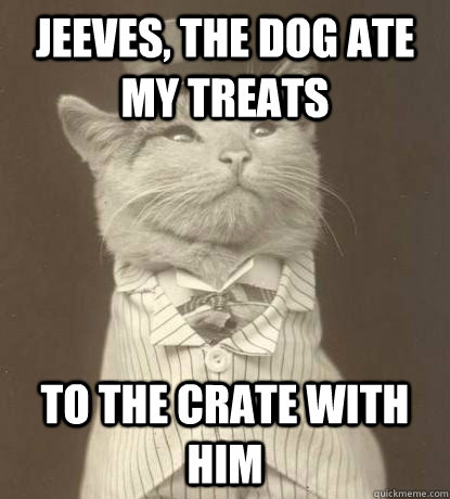jeeves the dog ate my treats to the crate with him - Aristocat