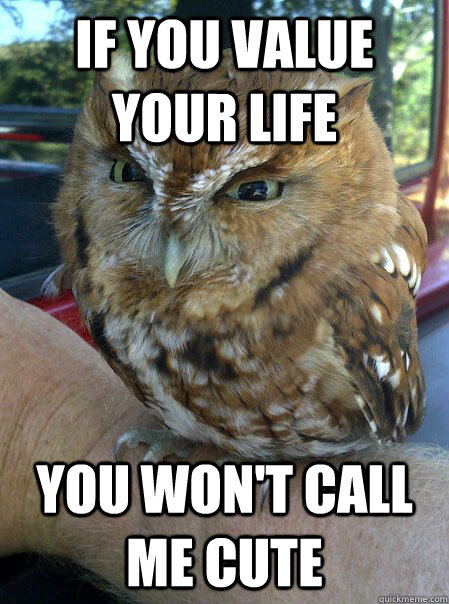 if you value your life you wont call me cute - Ornery Owl