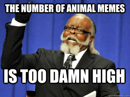 The number of animal memes is too damn high - Its too damn ...