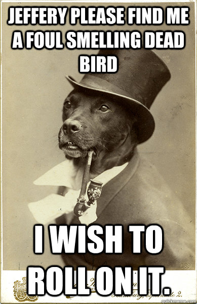 jeffery please find me a foul smelling dead bird i wish to r - Old Money Dog