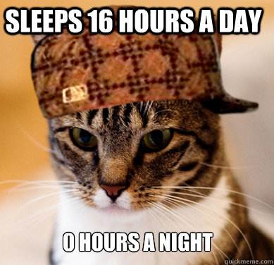 sleeps 16 hours a day 0 hours a night - Scumbag Cat