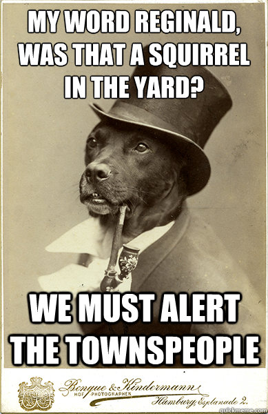 my word reginald was that a squirrel in the yard we must  - Old Money Dog