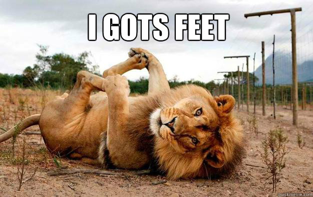 i gots feet - Lion has feets