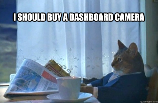 i should buy a dashboard camera - Sophisticated Cat