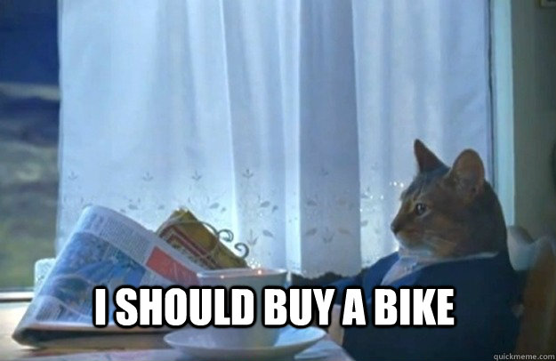 i should buy a bike - Sophisticated Cat