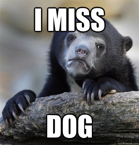 i miss dog - Confession Bear