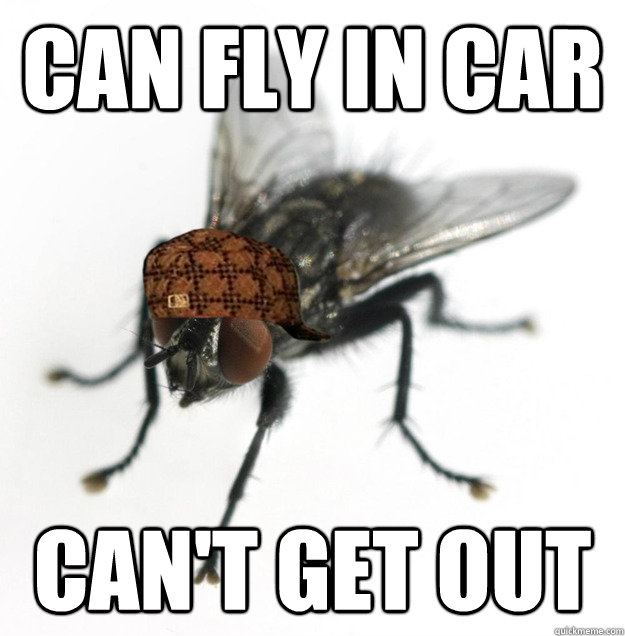 can fly in car cant get out - Scumbag Fly