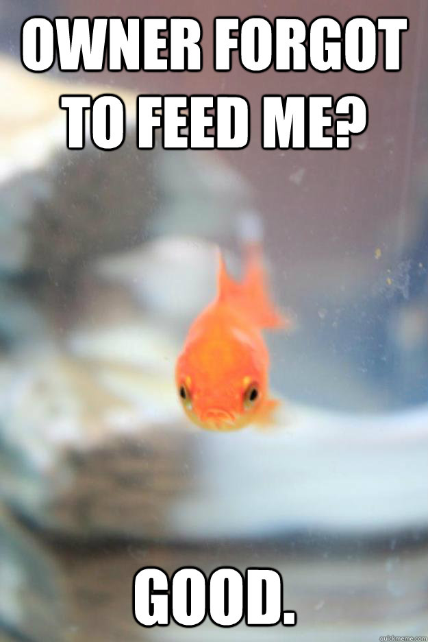 owner forgot to feed me good - Grumpy Fish